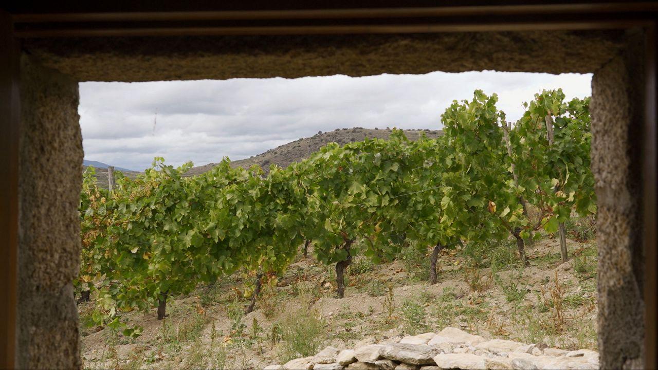 Ökologische Weine aus Spanien: ein wachsender Trend