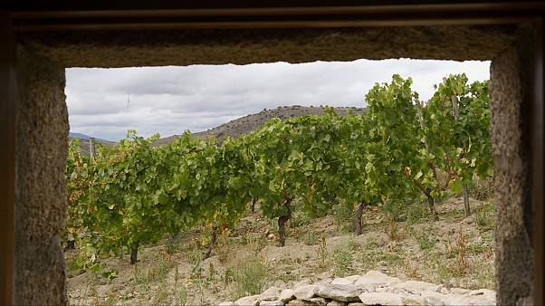 The organic wines of Spain restoring the ancient rhythms of production