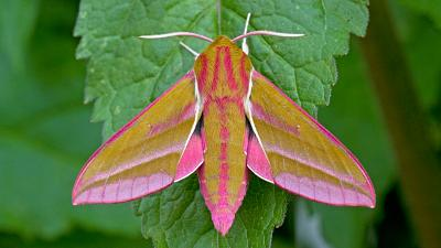 Moths are crucial for the pollination process.