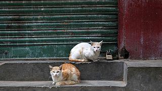 قطط تم تسميمها في المدينة المنورة تثير غضب السعوديين