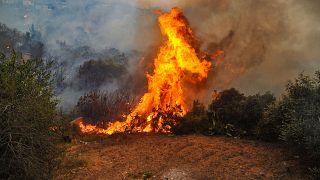 من الحرائق المنتشرة في اللاذقية