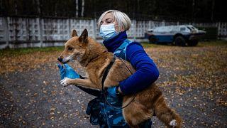 تدريب كلاب هجينة للكشف عن فيروس كورونا