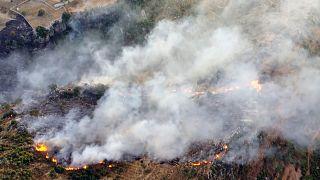 Suriye'de orman yangınları