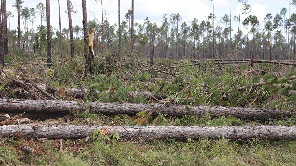 تجريف الغابات