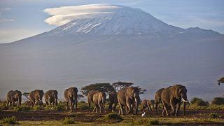 Départ de feu sur l'emblématique Mont Kilimandjaro, la Tanzanie mobilisée