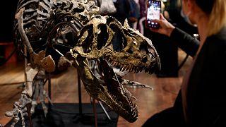 """هيكل الديناصور """"ألوصور"""" يعرض للبيع في مزاد في فرنسا"""