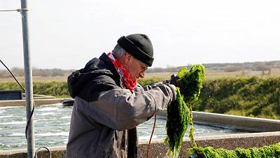 Growing vegetables in sea water could help with fresh water shortages.