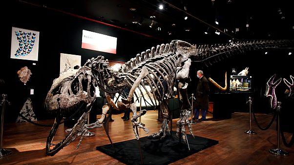 Le squelette d'un allosaure à Paris