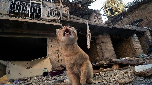A cat in a destroyed house in Stepanakert, the separatist region of Nagorno-Karabakh