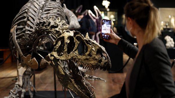 Аллозавр перед торгами в аукционном доме Друо