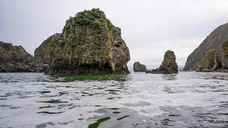Kamtchatka : l'hécatombe sur les plages et dans les fonds marins