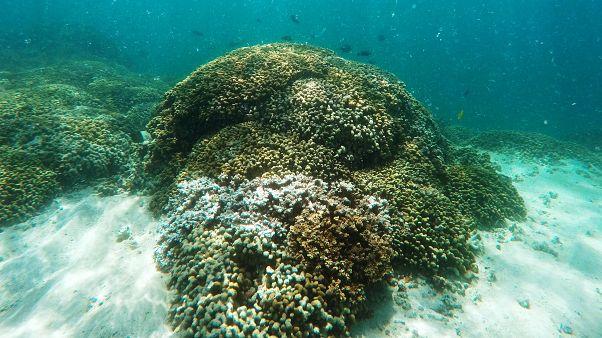 Metade da Grande Barreira de Coral morreu nos últimos 25 anos