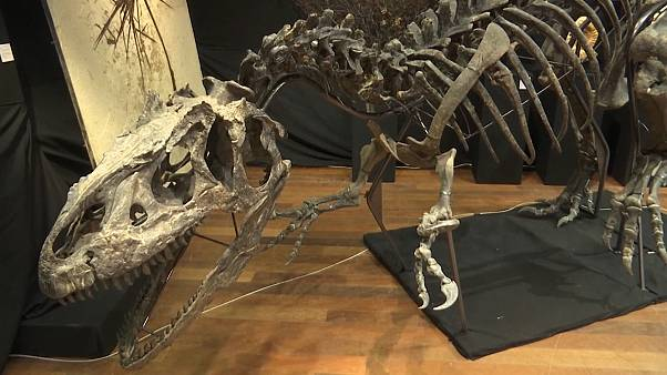 Rare Allosaurus skeleton sells for 3M Euros at auction