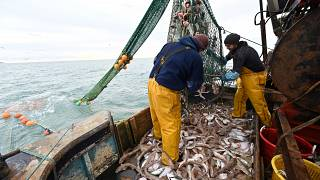 Newhaven fishing boat skipper Neil Whitney (L) and deckhand Nathan Harman (R) sort the fish from the net off the south-east coast of England, October 12, 2020.