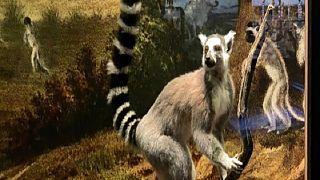 Le massif du Makay, un refuge de biodiversité à Madagascar