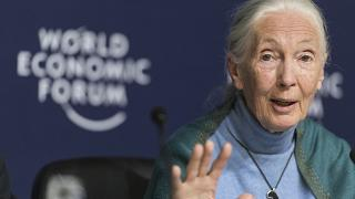 Jane Goodall, English primatologist and anthropologist, addresses the media during a press conference as part of the 50th annual meeting of the World Economic Forum (WEF)