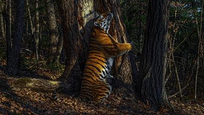 The Embrace by Sergey Gorshkov, Russia