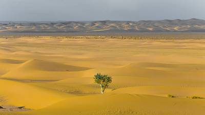 Not much data exists about the number of trees found in desert regions.