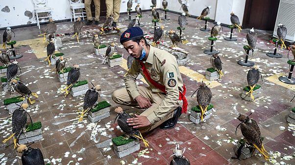 Bazı Asya ve Arap ülkelerinde şahin ve kartal gibi yırtıcı kuşlarla avlanmak oldukça popüler bir spor.