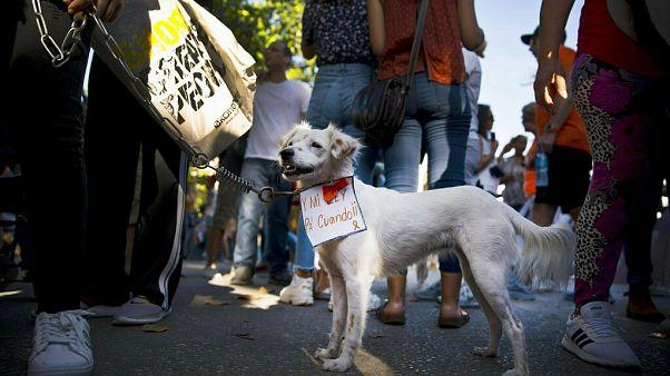 Um cão cubano no protesto de abril de 2019