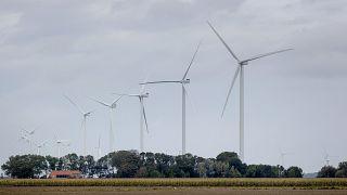 طواحين هوائية في مزرعة بورينغويرف،شمال هولندا في سبتمبر2020