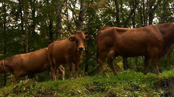 Mont-Blanc : comment le réchauffement climatique affecte la biodiversité et l'agriculture