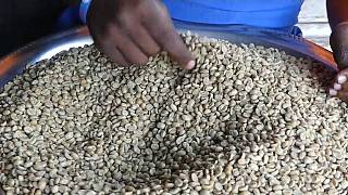 DRC: A coffee entrepreneur's success