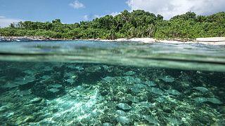 Elections aux Seychelles: Le président Faure et deux autres candidats en lice