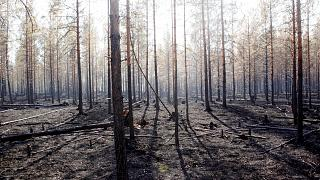 Une forêt brûlée à Angra en Suède, le 22 juillet 2018