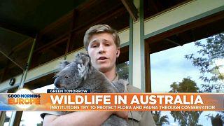Conservationist Robert Irwin holds koala