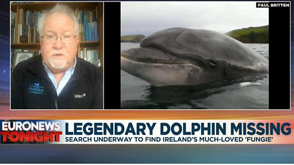 Dr Kevin Flannery, director of Dingle Oceanworld Aquarium in Dingle Harbour, speaking to Euronews Tonight