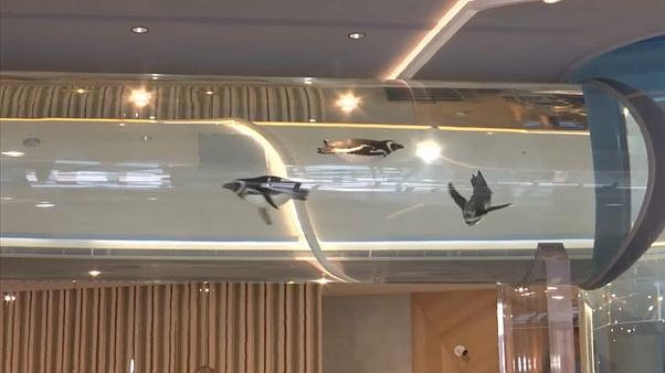 Hotel mit Pinguinen und Quallen