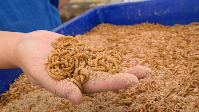 The farm will produce mealworms as a low-carbon protein source.
