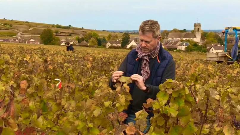 Pommard, Bourgogne