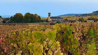 Vinicultores franceses querem compensações