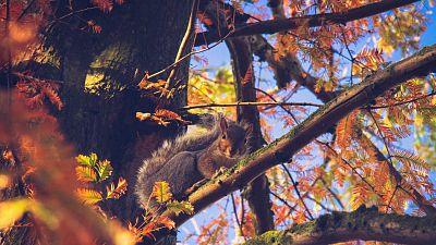 A curious squirrel in Greenwich Park