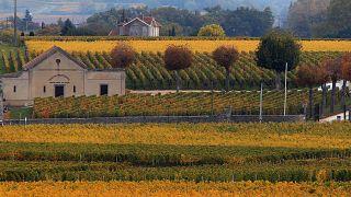 Vigne di Saint Emilion (Bordeaux) - archivio, 2015