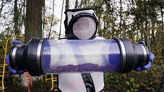 از بین بردن کندوی زنبور قاتل در آمریکا