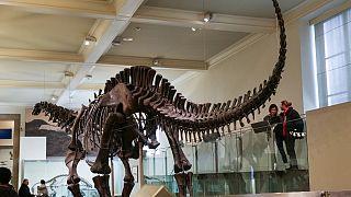 Titanozor iskeleti
