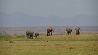 "Kenyan National Park Sees a Record-Breaking Elephant ""Baby Boom"""