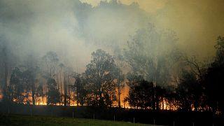 Erdőtűz Új-Dél-Wales-ben 2020. január 25-én