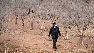 مزارع في أغادير