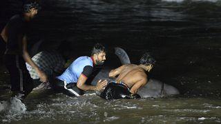 انقاذ الحيتان في سريلانكا