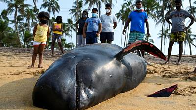 120 whales saved off the coast of Sri Lanka