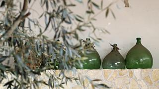 olive tree, Italy