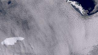 کوه یخی به بزرگی لوکزامبورگ حیات جانوران جوان جورجیای جنوبی را به خطر انداخته است