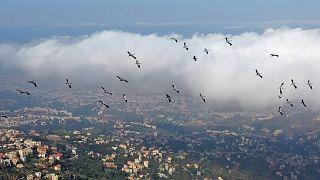 Göçmen kuşlar.