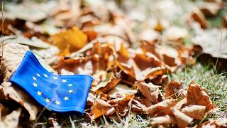 Dead leaves on the grass with the European flag