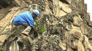 رجال نينجا كمبوديون يحمون رمز البلاد من زحف الأدغال
