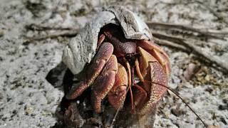 National Park on November 6, 2020 shows a hermit crab in a broken shell along the shore of the national park in Krabi
